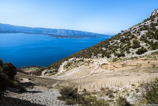 Vignes Croatie
