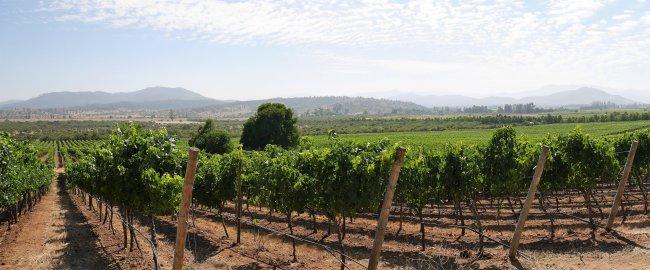 vallée de Casablanca au Chili