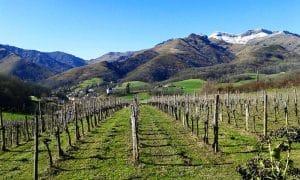 Le Txakoli : le vin emblématique du Pays Basque Espagnol
